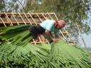 roofer at work - mekong valley, cambodia